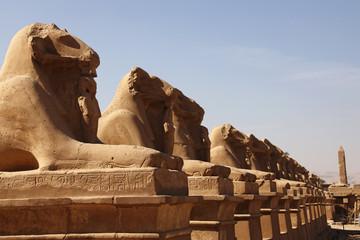 Foto op Textielframe Historisch mon. Avenue of Sphinxes, Karnak Temple, UNESCO World Heritage Site, Luxor, Thebes, Egypt, North Africa, Africa