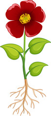 Wall Mural - Red flower with green leaves and roots on white background