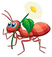 Foto op Textielframe Kids Ant holding daisy flower