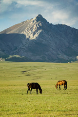 Foto op Aluminium Olijf The horse is eating grass with a beautiful landscape at Song Kul Lake grassland in the summertime, Song Kul Lake, Kyrgyzstan