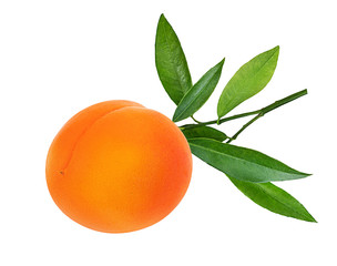 Wall Mural - apricot isolated on white background