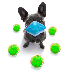 Keuken foto achterwand Crazy dog ill sick dog with illness and face mask , cornavirus all over
