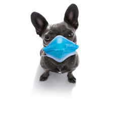 Poster Crazy dog ill sick dog with illness and face mask , cornavirus all over