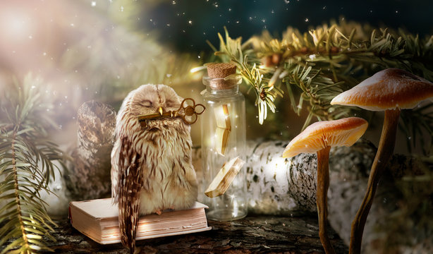 Fantasy wise sleeping owl is the keeper of secrets holds key to knowledge in beak in magical mysterious forest with magic mushrooms and books locked in glass bottle