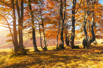 Wall Mural - Beautiful sunny day in autumnal forest.