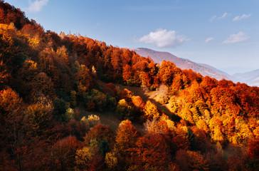 壁紙(ウォールミューラル) - Bright autumn forest on a mountain slope.  Location place of Carpathian mountains, Ukraine, Europe.