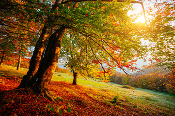 Wall Mural - Beautiful sunny day in Carpathians mountain valley. Colorful foliage in the autumn park.