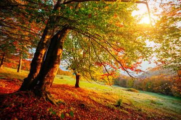 壁紙(ウォールミューラル) - Beautiful sunny day in Carpathians mountain valley. Colorful foliage in the autumn park.