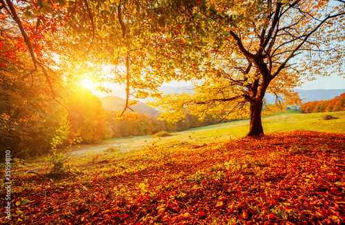 Wall mural Beautiful sunny day in Carpathians mountain valley. Colorful foliage in the autumn park.