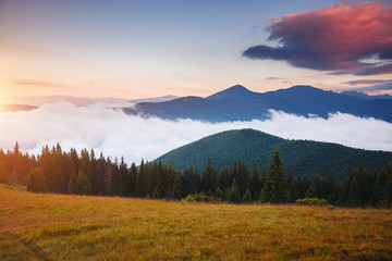 壁紙(ウォールミューラル) - Morning panorama of misty mountains. Location place of Carpathians mountains, Ukraine.