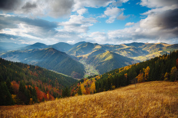 Wall Mural - Captivating autumn forest on a mountain slope. Location place of Carpathian mountains, Ukraine.