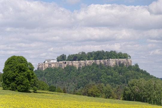 Festung Königstein und blühendes Rapsfeld