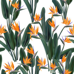 Bird of paradise tropical flower vector seamless pattern.