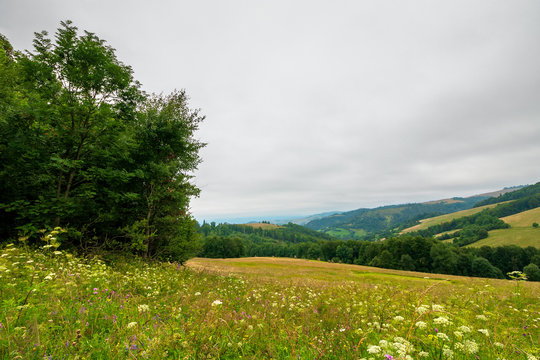 tree on the grassy meadow in countryside landscape. stormy overcast weather in mountain. beautiful nature of rural scenery in summer