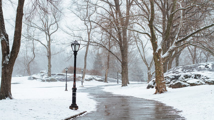 Obraz Bare Trees On Snow Covered Landscape - fototapety do salonu