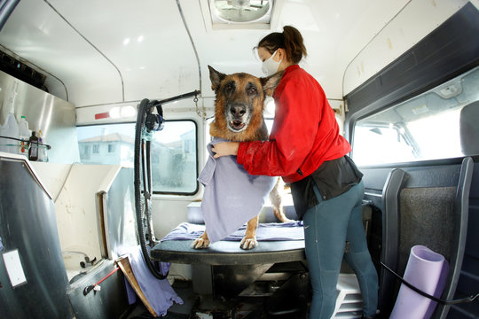 Mobile dog grooming during the outbreak of the coronavirus disease (COVID-19) in California