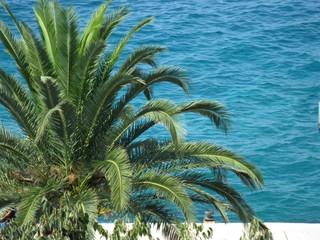 Palma nad morzem
