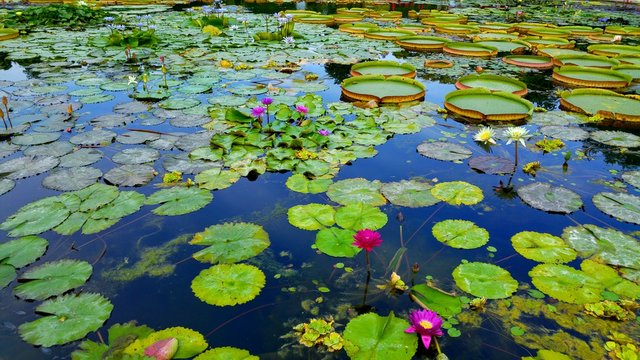 High Angle View Of Lily Pads Floating On Water