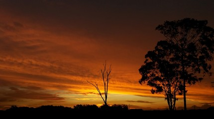 Foto auf AluDibond Violett rot Silhouette Trees On Landscape Against Orange Sky