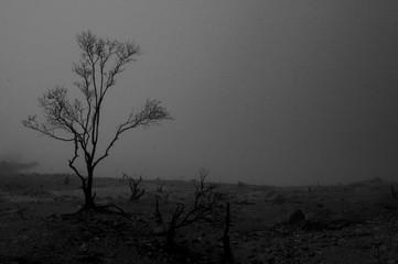 Fototapeten Grau Bare Tree On Landscape Against Clear Sky