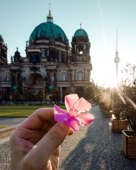 Cropped Hand Of Person Holding Flower Against Historic Buildings