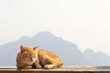 Red cat basking in the sun with mountain background..