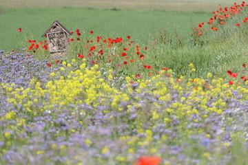 Foto auf Leinwand Olivgrun Bienenhotel im Blumenfeld