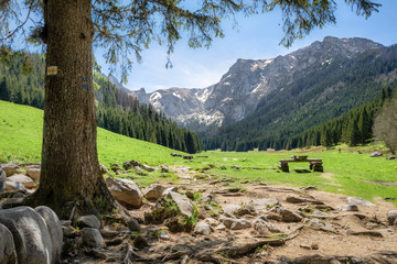 View of glade in the Small Meadow Valley in Tatra mountains, Poland