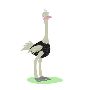 A baby ostrich is standing. Cartoon vector isolated illustration in flat style with texture.