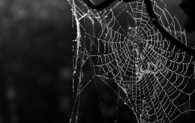 Fototapeta Macro Shot Of Wet Spider Web obraz