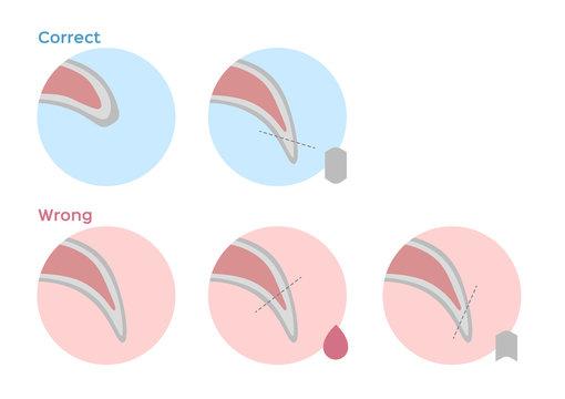 dog nail trimming / fingernail vector