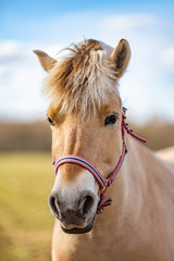 Image of young horse on the field