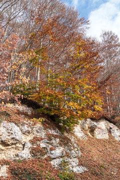 Monte Livata autunno Lazio Italia