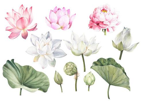 Pink lotus white lotus and leaves hand drawn watercolor set