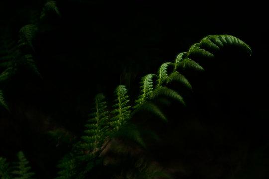 A fern leaf in spring - low key