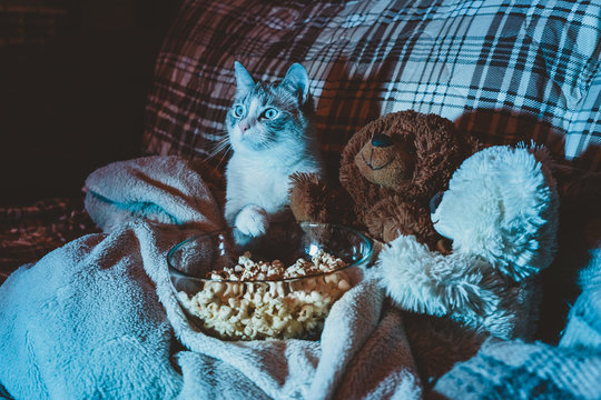 The Cat is watching a movie on the sofa
