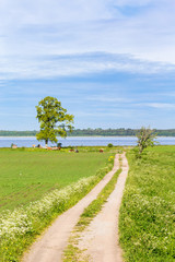Summer Idyll with a road to the lake