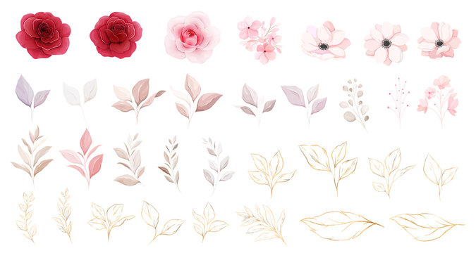Floral elements vector set. Botanic individual elements of red & peach roses, and white anemone flowers, leaf, branch. Botanic illustration for wedding or logo composition vector