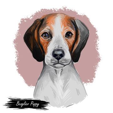 Beaglier dog designer breed, offspring Beagle and Cavalier King Charles Spaniel isolated digital art illustration. Hand drawn dog muzzle portrait, puppy cute pet. Dog breeds originating United States.