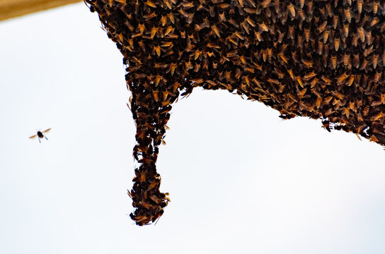 The Bee Hive Full of Bees
