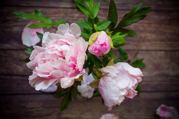 beautiful blooming peonies with petals on a wooden table