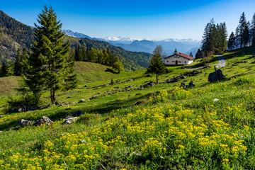 Urlaub in Bayern: perfekte idyllische Landschaft im Chiemgau unterhalb vom Feichteck / Hochries mit blühenden Wiesen und schneebedeckten Bergen