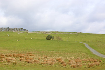 Northumberland Moors by Housesteads, Hadrians Wall in England