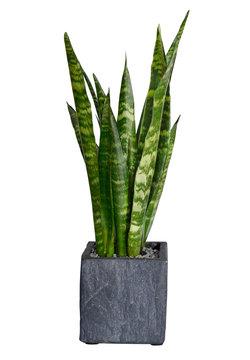 fern plant potted interior deco decoration flat
