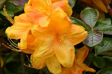 Blumen 1207