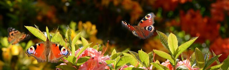 Schmetterling 678