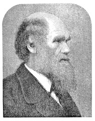 Engraving portrait of Charles Darwin (1809 - 1882), English, naturalist, geologist,biologist, famous for his scientific theory of science of evolution