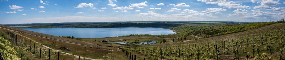 Blick vom Weinberg auf den Geiseltalsee als Panoramaaufnahme