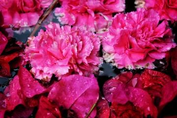 Stores à enrouleur Rose pink flowers