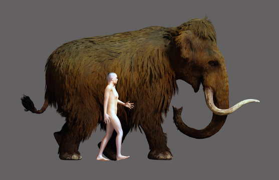 Woolly Mammoth And Human Size Comparison